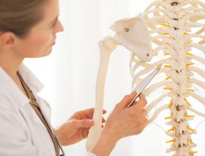 Skeletten en modellen