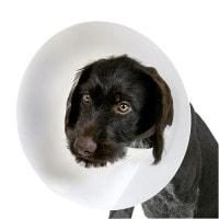 Hundehalskrause