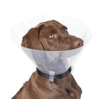 Halskraag voor honden