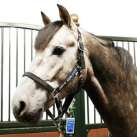 Horse Control systeem