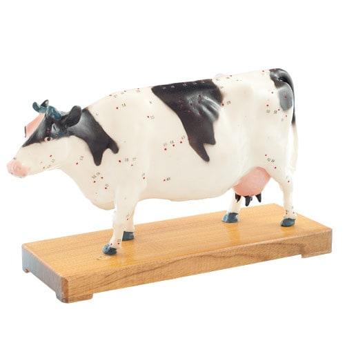 Acupunctuurmodel van een koe