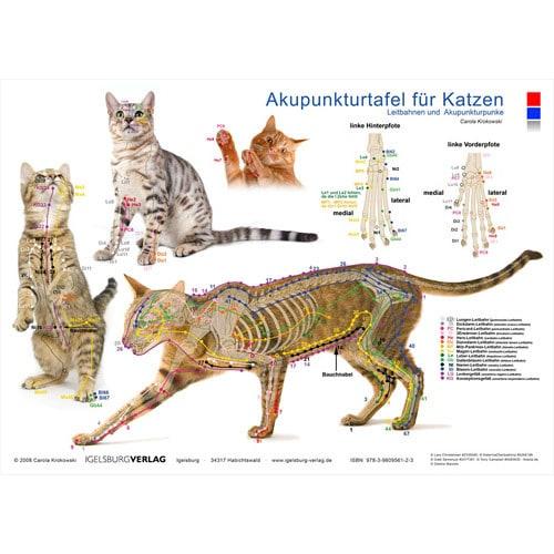 Akupunkturtafel >Katze<