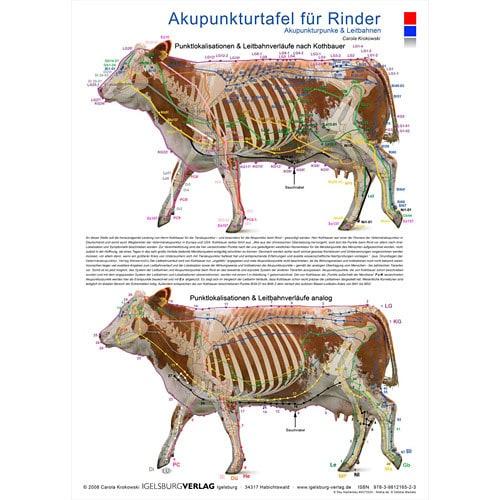 Akupunkturtafel «Rinder»