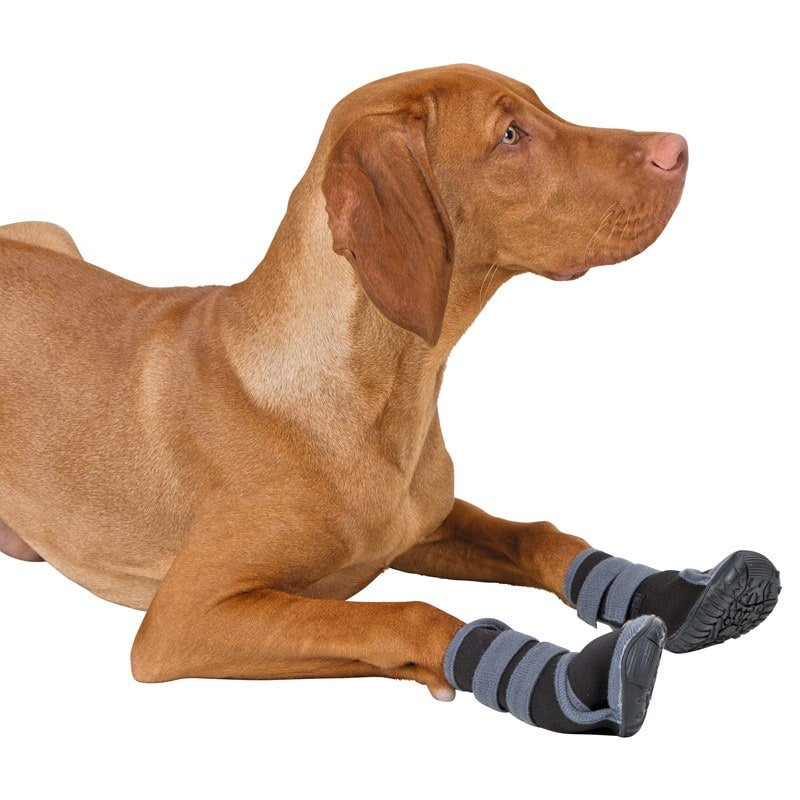 https://www.praxisdienst.nl/out/pictures/generated/product/1/800_800_100/191501_hundeschuhe_active.jpg