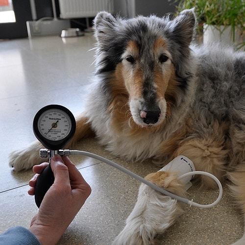 DuraShock DS54 bloeddrukmeter