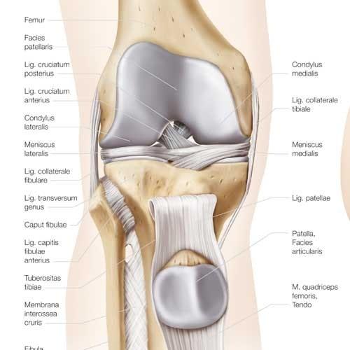 """Anatomische Wandplaat """"De Knie/De Heup"""""""