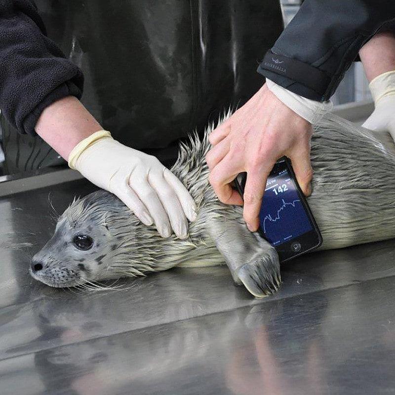 AliveCor veterinaire ECG-monitor