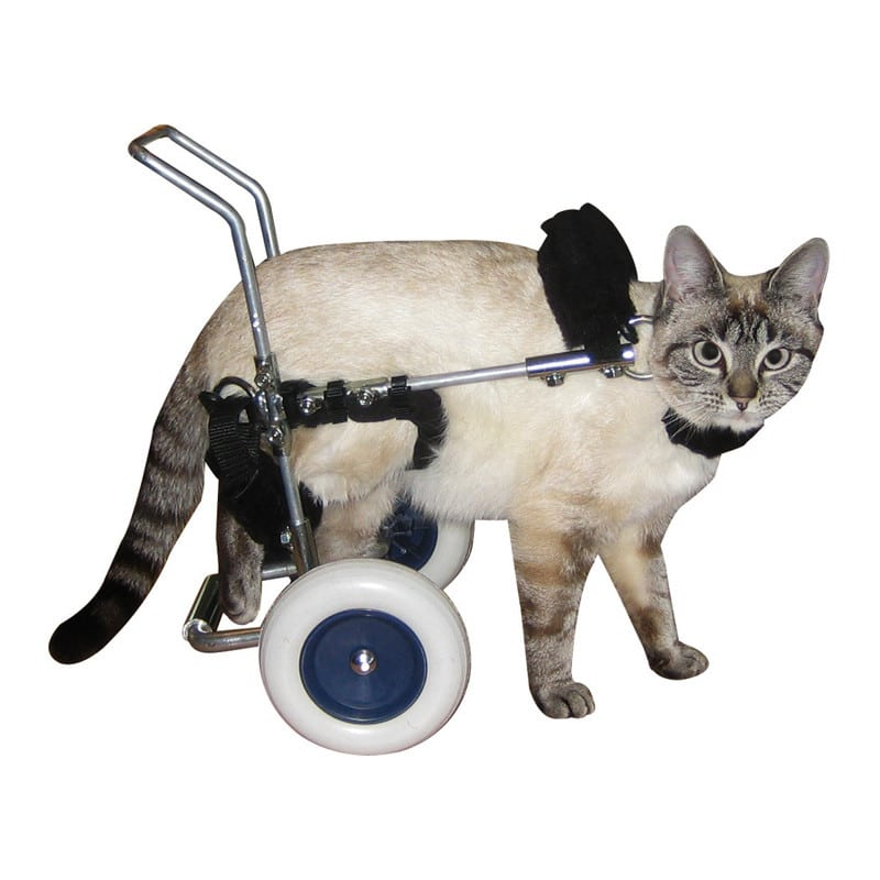 Canis mobile hondentrolley