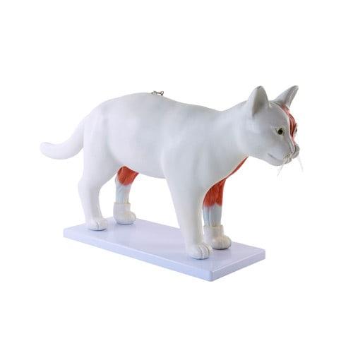 Uitneembaar model 'Kat'