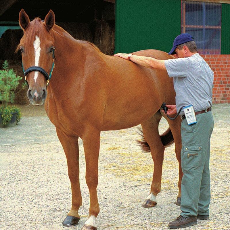 Drachtigheidsdiagnoseapparaat voor paarden