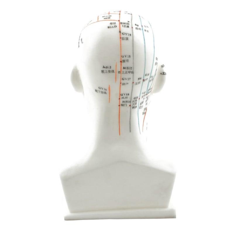 Hoofd-acupunctuurmodel