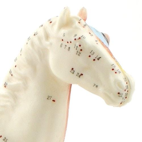 "Acupunctuurmodel ""Paard"""