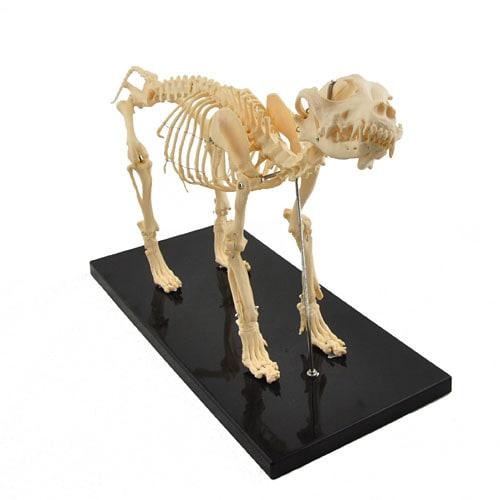 Hondenskelet, demonteerbaar