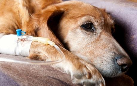 Infusietoebehoren voor dierenartsen