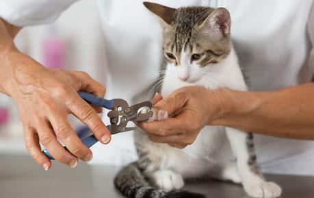 Hoef-, nagel- en klauw-verzorging