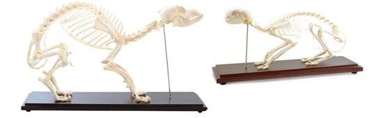 Anatomische modellen en diagrammen