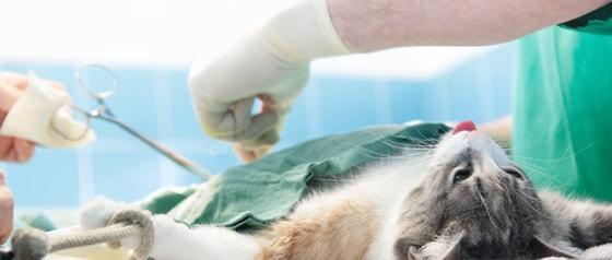 OK-benodigdheden voor dierenartsen