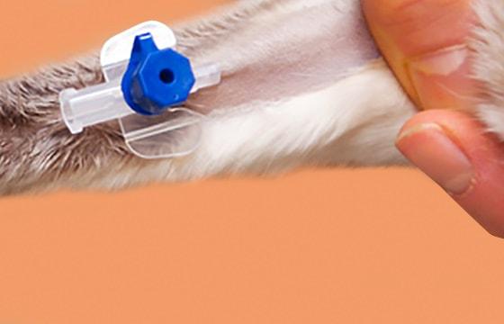 Veneuze katheters voor dieren
