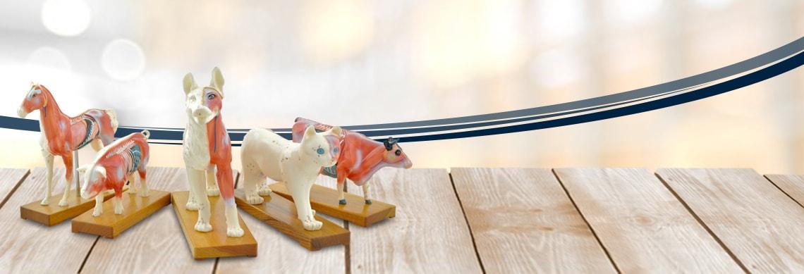 Acupunctuurmodellen voor dierenartsen